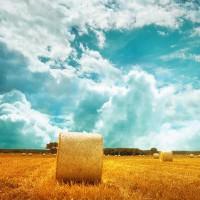 Как распространить своё фермерское хозяйство