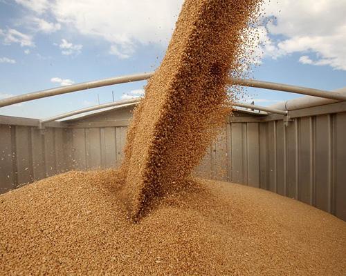 В России будут созданы правила торговли зерном