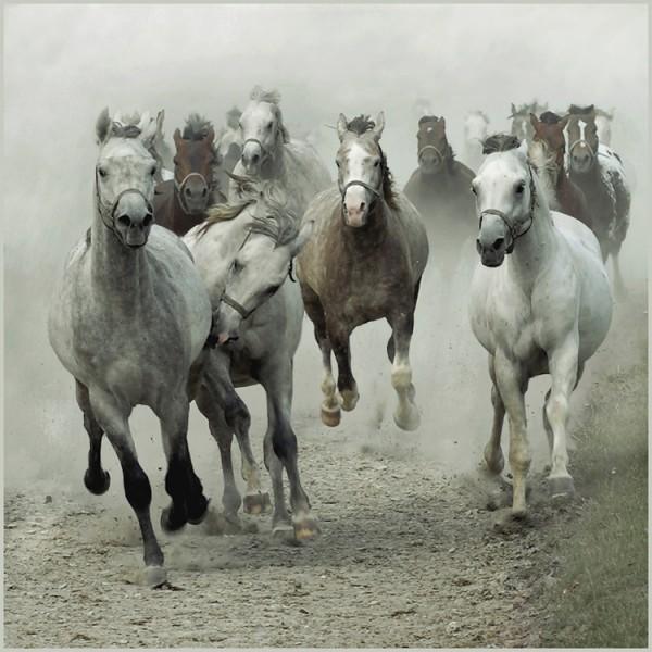 Разведение лошадей. - loshadi
