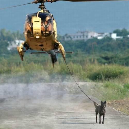 Выгул собак - sobaki