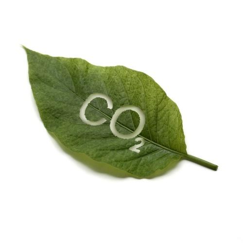 СО2 экстракции из  растительного и животного сырья - CO2