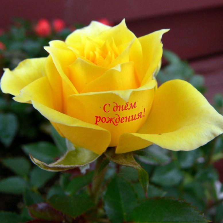 Говорящие цветы - cvetu