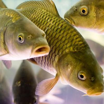 Доставка рыбной продукции - ryba