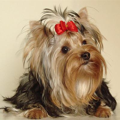 Я занимаюсь разведением собак - sobaka
