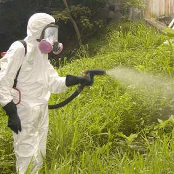 Посредничество на инсектицидах - Insekticid