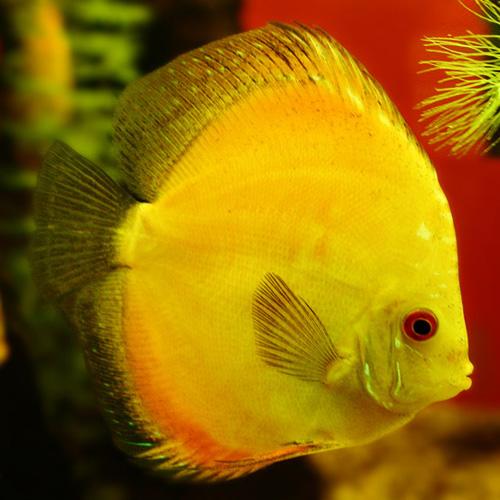 Разведение аквариумных рыбок - rybka
