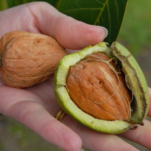 Идея бизнеса орехи бизнес план небольшой фирмы