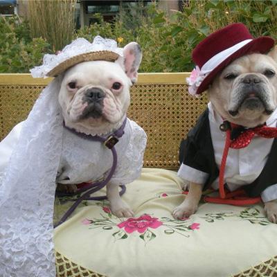 Проведение свадебных торжеств для собак - svadba_sobak