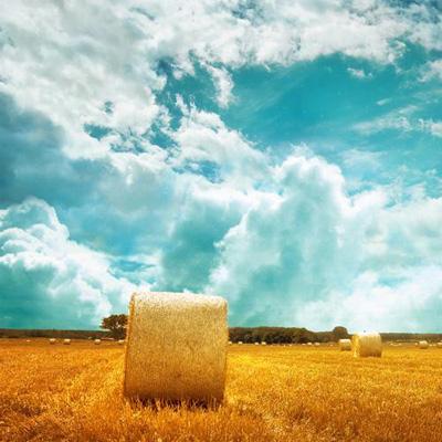 Как поднять своё фермерское хозяйство - seno
