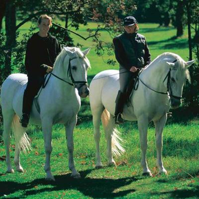 Конные прогулки - konnye