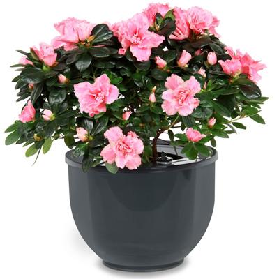 Опрос - цветочная гостиница - cvety