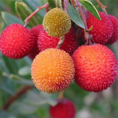 Фрукты и ягоды из Тайланда - frukty