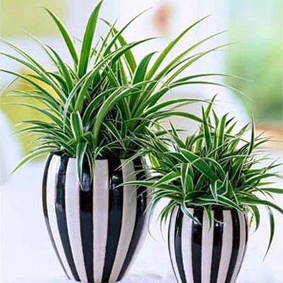 Комнатные растения в бизнес масштабах - komnatnye_rasteniya