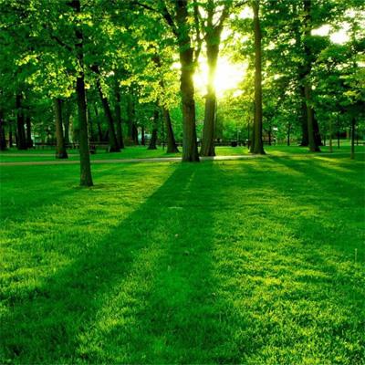 С помощью федеральной или областной программы - park