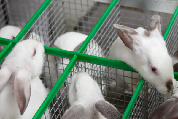 Разведение кроликов как проверенный бизнес - rasvedenie_krolikov