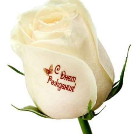 Наклейки на цветы - nakleika