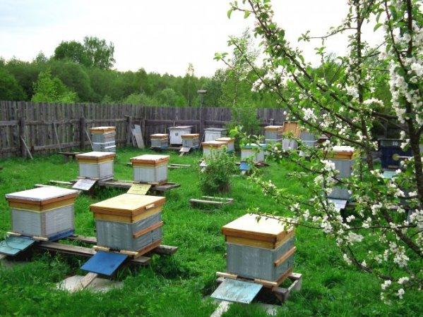 Бизнес на пчеловодстве с нуля - pchelovodstvo