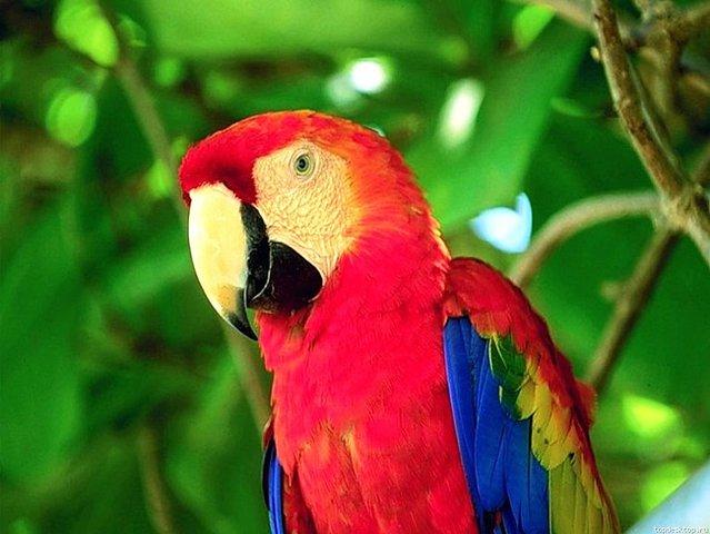 Разведение попугаев - popugai