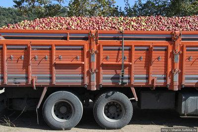 Поставка яблок на консервные заводы. - skupka_yablok