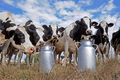 Молочное животноводство. - molochnoe_givotnovodstvo